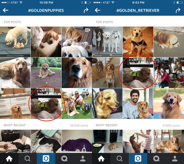 Trending in GoldenPuppies and Golden_Retriever